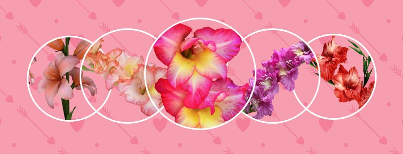 What You Need to Know About August's Birth Flowers: Gladiolus