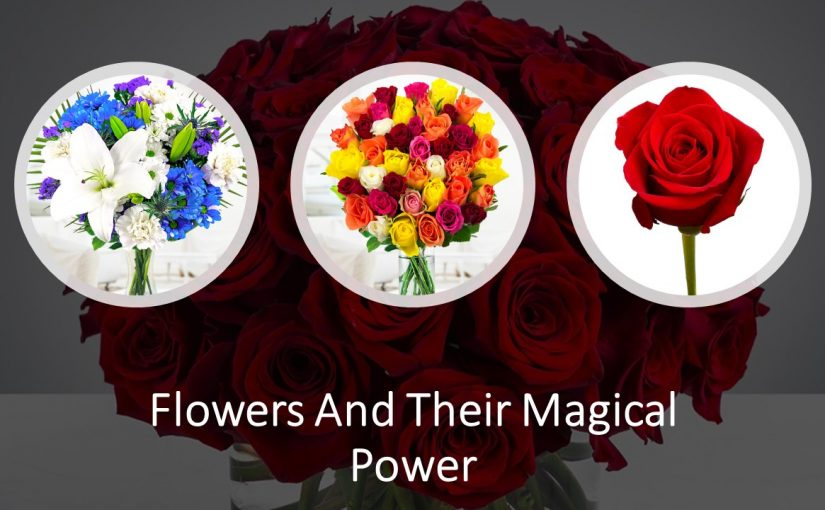 6 Beautiful Flowers And Their Magical Power On Mankind
