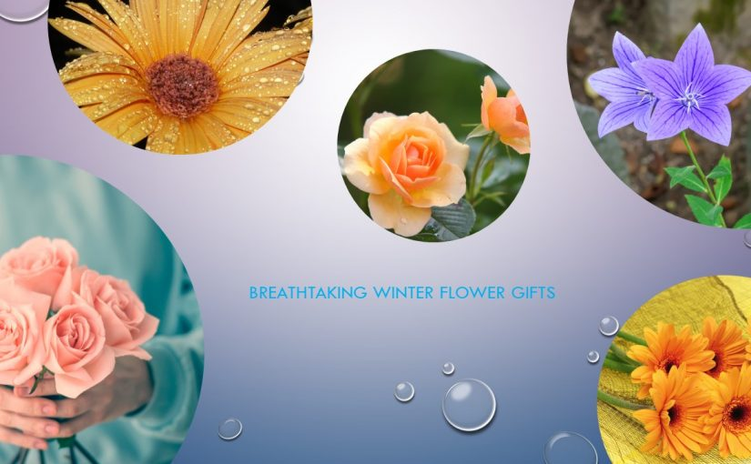 This Winter, Blossom Your Life with Breathtaking Winter Flower Gifts!