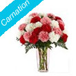 Send Carnation Flowers to Bhilai