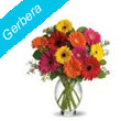Gerbera to Cuttack