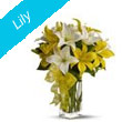Lily Flowers to Bhilai