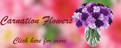 Online Flowers to Bhilai
