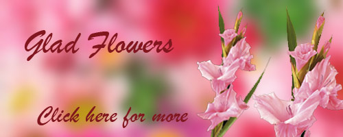 Send Flowers to Bhilai
