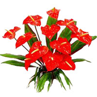 Send Flowers to Delhi Online