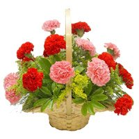 Mother's Day Flowers to India : Carnations Flowers to India