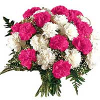 Bunch of 12 pink and white carnation -Send Flowers to India