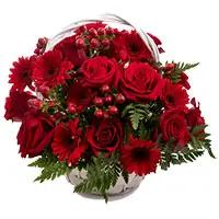 Online Flower Delivery in Delhi : Red Gerbera Bouquet