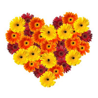 Flowers to India : Gerbera Heart