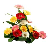 Send Flowers to Delhi : Mixed Gerbera