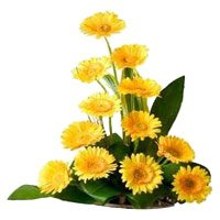 Fresh Flower Delivery in India - Yellow Gerbera