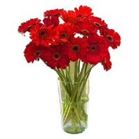 Flowers to India : Red Gerbera in Vase