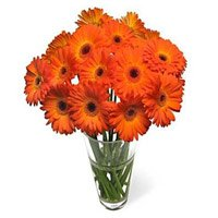 Send Flowers to India : Orange Gerbera