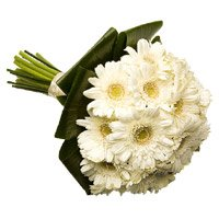 Bouquet of 36 white gerbera