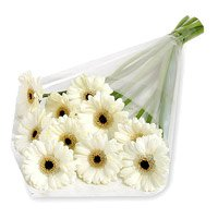 Send Flowers to India - White Gerbera