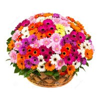 Diwali Flower Delivery in India - Mix Gerbera Basket