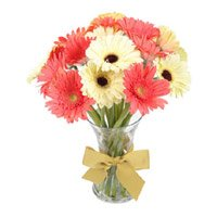 Best Online Flowers to India : Mix Gerbera