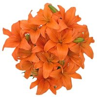 Bouquet of orange lily