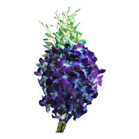 Bouquet of 20 blue orchids - Send Flowers to India