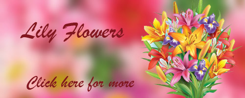 Deliver Flowers in Bhilai
